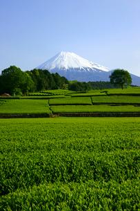茶畑と富士山の写真素材 [FYI02497264]