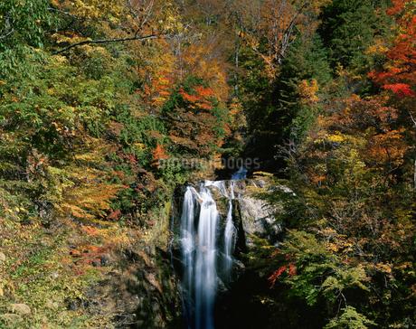 天生中滝と紅葉の写真素材 [FYI02499058]