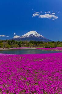 富士山と芝桜の写真素材 [FYI02500395]