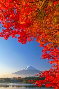 紅葉と富士山の写真素材 [FYI02500412]