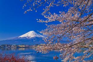 富士山と桜の写真素材 [FYI02500442]