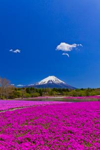 富士山と芝桜の写真素材 [FYI02500449]