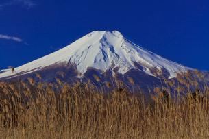 忍野村から見た富士山の写真素材 [FYI02500548]