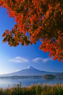 紅葉と富士山の写真素材 [FYI02500579]
