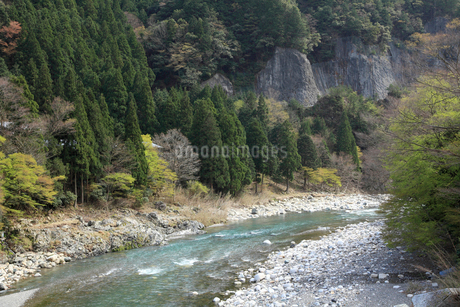 愛知川渓谷(永源寺ダム上流)新緑の写真素材 [FYI02500597]