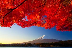 朝焼けの富士山と紅葉の写真素材 [FYI02500659]