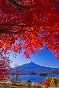 紅葉と富士山の写真素材 [FYI02500671]
