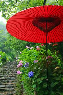 太平山自然公園の雨降るあじさい坂の写真素材 [FYI02500702]