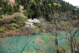 愛知川渓谷(永源寺ダム上流)新緑の写真素材 [FYI02500703]