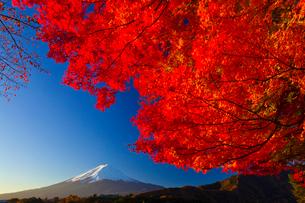 朝焼けの富士山と紅葉の写真素材 [FYI02500809]