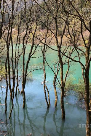 永源寺ダムの木々の写真素材 [FYI02500891]