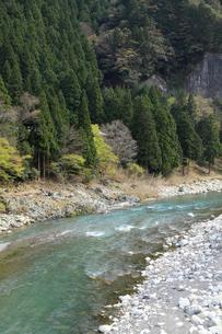 愛知川渓谷(永源寺ダム上流)新緑の写真素材 [FYI02500940]