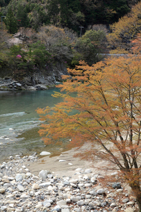 愛知川渓谷(永源寺ダム上流,黄和田地区)新緑の写真素材 [FYI02500963]