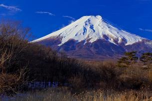 忍野村から見た富士山の写真素材 [FYI02500994]