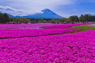 富士山と芝桜の写真素材 [FYI02501105]