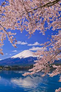 富士山と桜の写真素材 [FYI02501159]
