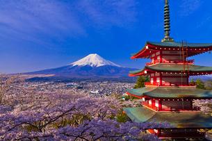 新倉山浅間公園から見た富士山と桜と忠霊塔の写真素材 [FYI02501389]