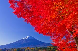紅葉と富士山の写真素材 [FYI02501454]