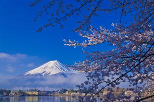 富士山と桜の写真素材 [FYI02501765]