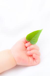 葉を持つ赤ちゃんの手の写真素材 [FYI02503232]