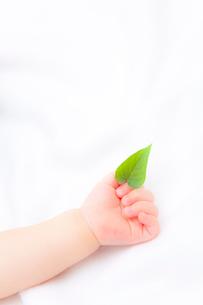葉を持つ赤ちゃんの手の写真素材 [FYI02503409]