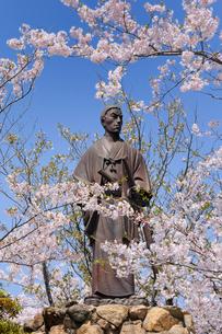 桜咲く日和山公園の高杉晋作像の写真素材 [FYI02503447]