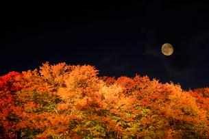 富士河口湖紅葉まつりのライトアップされた紅葉と月の写真素材 [FYI02503723]