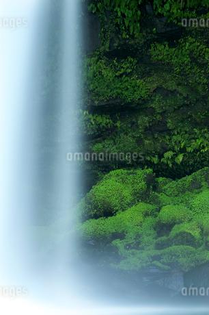 慈恩の滝 の写真素材 [FYI02506091]