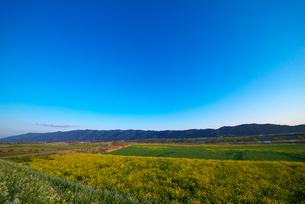 耳納連山を背景に筑後川河川敷の菜の花の写真素材 [FYI02506255]