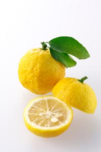柚子の写真素材 [FYI02506805]