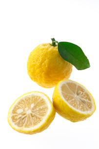 柚子の写真素材 [FYI02507294]