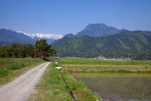 安曇野の水田と有明山の写真素材 [FYI02508025]