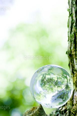 林の中の地球儀の写真素材 [FYI02508404]
