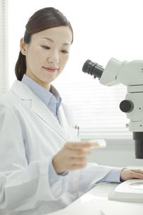 シャーレを観察する日本人女性研究者の写真素材 [FYI02508827]