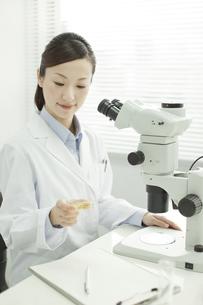 シャーレを観察する日本人女性研究者の写真素材 [FYI02508893]