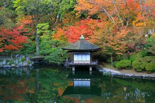 紅葉渓庭園の紅葉の写真素材 [FYI02512271]