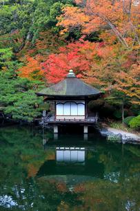 紅葉渓庭園の紅葉の写真素材 [FYI02512329]