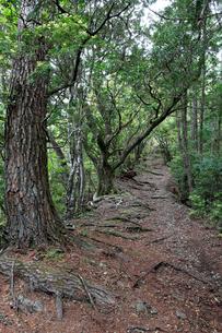 熊野古道中辺路の赤木越の写真素材 [FYI02512337]