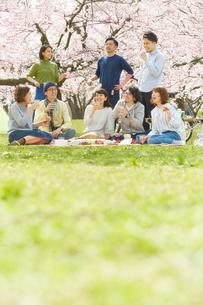 お花見をする男女8人の写真素材 [FYI02512340]