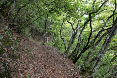 熊野古道中辺路の赤木越の写真素材 [FYI02512409]