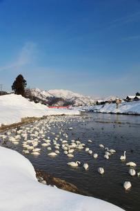 冬の五十嵐川の写真素材 [FYI02512460]