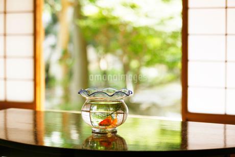 テーブルの上の金魚鉢の写真素材 [FYI02513282]