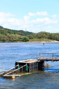 三面川の鮭漁の仕掛けの写真素材 [FYI02514109]