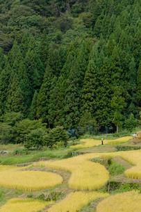 福島の棚田の写真素材 [FYI02514827]