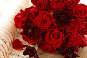 赤いバラとチョコレートコスモスの写真素材 [FYI02514889]