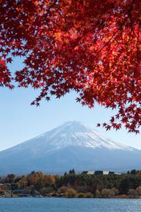 河口湖の紅葉と富士山の写真素材 [FYI02516687]