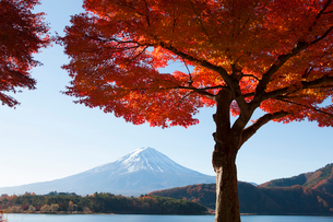 河口湖の紅葉と富士山の写真素材 [FYI02516855]