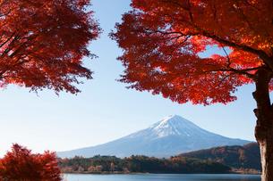 河口湖の紅葉と富士山の写真素材 [FYI02517052]