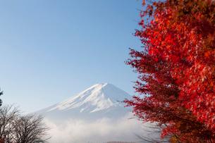 河口湖の紅葉と富士山の写真素材 [FYI02517165]