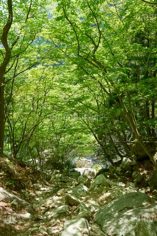 御在所岳登山道からの眺めの写真素材 [FYI02518064]